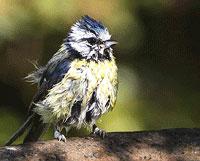 Burung mandi dan berjemur
