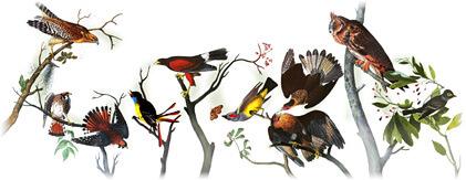 Tips perawatan burung dan cara merawat burung berkicau