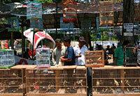Membeli Burung di Pasar Burung