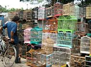 Memilih Burung di Pasar Burung
