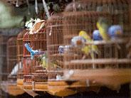 Pasar Burung di Luar Negeri