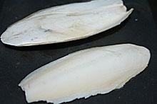 Tulang Sotong