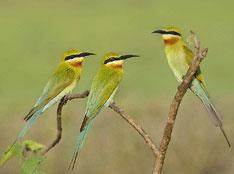 Memaster Burung Berkicau Smart Mastering