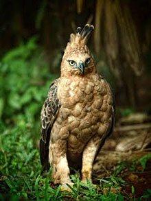 Unduh 108+ Foto Gambar Burung Elang Dari Samping HD